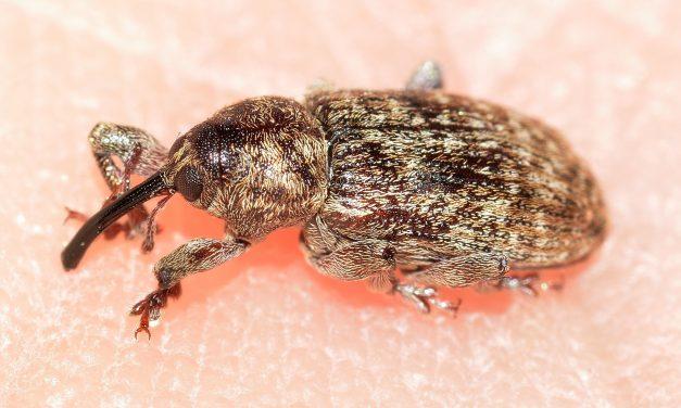 Comment se débarrasser de ces blattes qui envahissent votre demeure ?