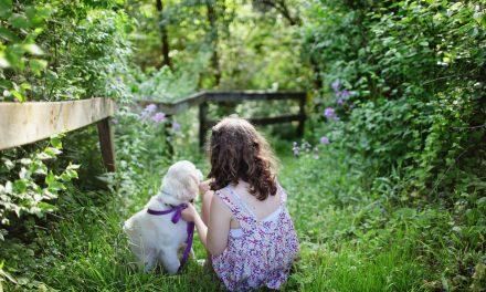 Quels matériels pour entretenir efficacement son jardin l'été ?
