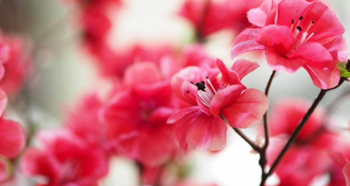Tout savoir sur les fleurs artificielles : coûts, avantages, entretien et astuces déco