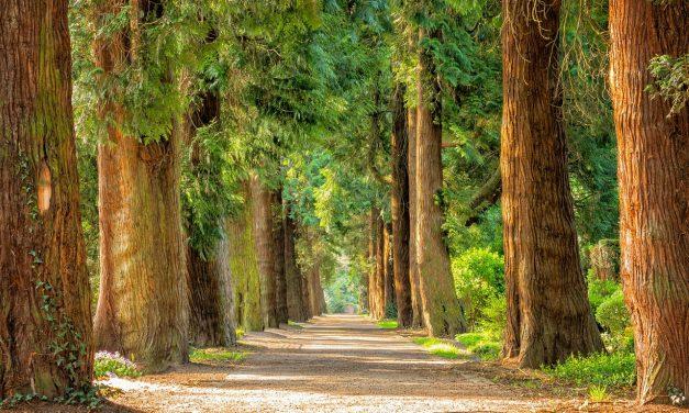 Une formation tournée vers la nature et l'environnement