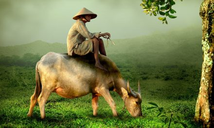 Etablissez votre demande de visa pour le Vietnam via le web