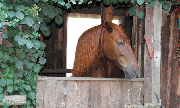 Les choses à savoir avant d'acheter un cheval