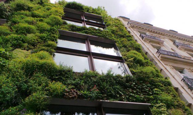 Mur végétal : une tendance qui s'invite chez vous !